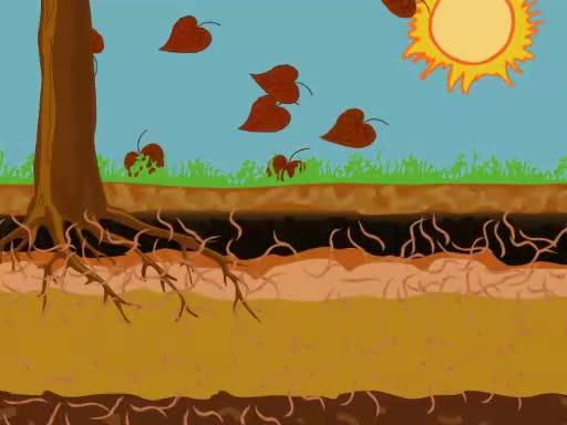 Analyse der Regenwurm-Populationen im Boden