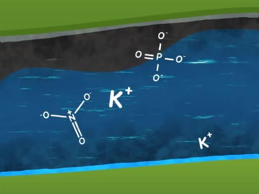 Water Quality Analysis via Indicator Organisms