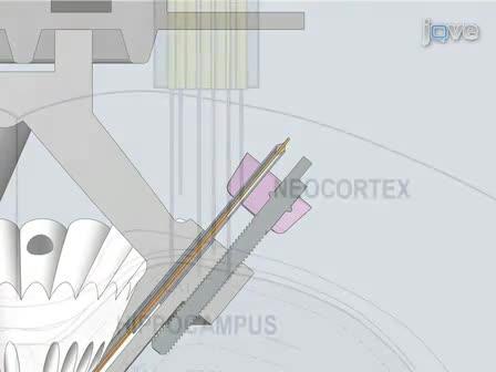 Micro-drive Array for Chronic <em>in vivo</em> Recording: Drive Fabrication