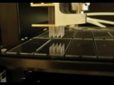 Обработка Лоблолли Пайн PtGen2 кДНК Microarray