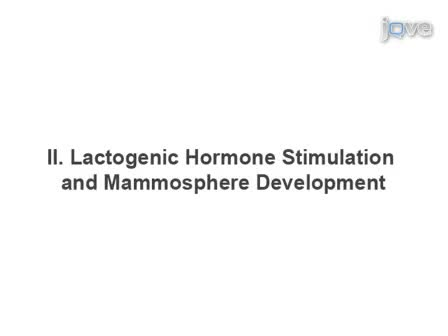 Mouse Mammary Epithelial Cells form Mammospheres During Lactogenic Differentiation