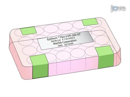 <em> In Vitro</em> Раздражение кожи испытаний (ГСИ), используя эпидермиса реконструкции человеческого эпидермального (RHE) Модель
