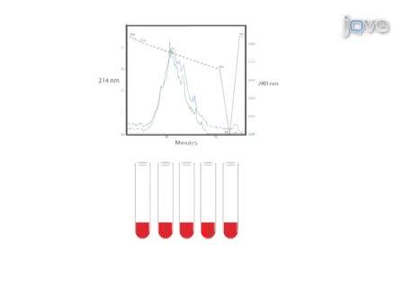 Quantitative Phosphoproteomics in Fatty Acid Stimulated <em>Saccharomyces cerevisiae</em>