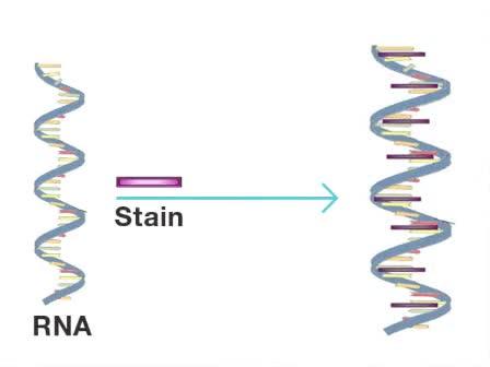 Experion RNA Assay - Bio-Rad - ADVERTISEMENT