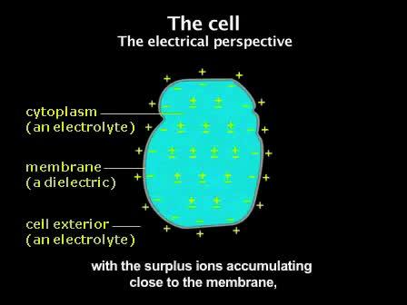 Medir a tensão de membrana induzida com Di-8-ANEPPS