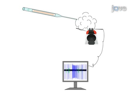 Single Sensillum Recordings in the Insects <em>Drosophila melanogaster</em> and <em>Anopheles gambiae</em>