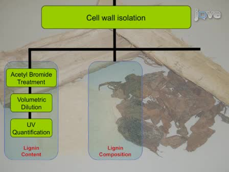 Comprehensive Compositional Analysis of Plant Cell Walls (Lignocellulosic biomass) Part I: Lignin