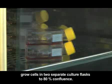 Cell elektrosvetsade visualiseras med fluorescensmikroskopi