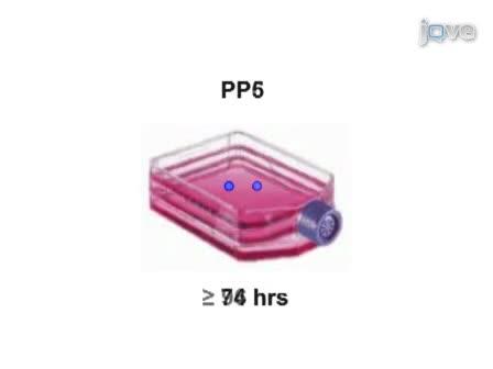Het isoleren van stamcellen uit Soft musculoskeletale weefsels