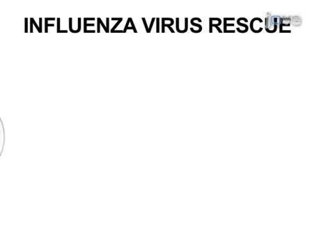 Generering av Rekombinant influensavirus från Plasmid DNA