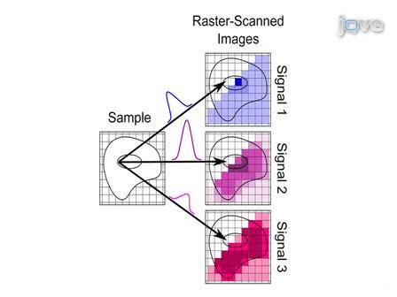 Imagem diferencial de estruturas biológicas com Duplamente-ressonante Scattering Anti-Stokes Raman coerente (CARS)