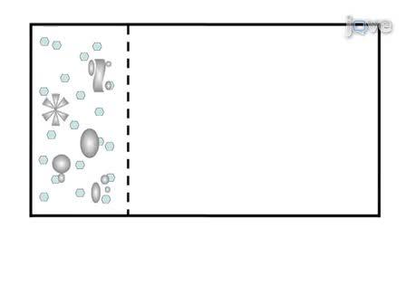 Azul nativos electroforesis en gel de poliacrilamida (BN-PAGE) para el análisis de los complejos Multiproteinas de lisados celulares