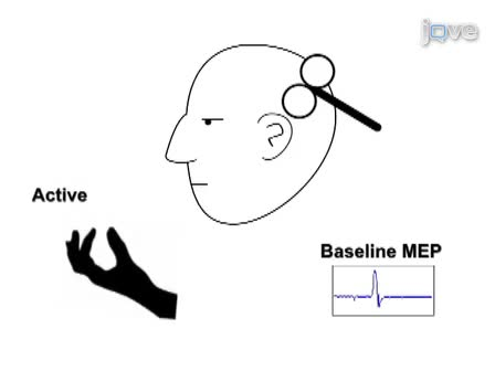 TMS: Using the Theta-Burst Protocol to Explore Mechanism of Plasticity in Individuals with Fragile X Syndrome and Autism