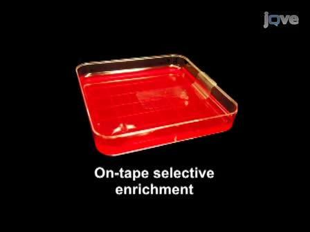 Combinazione di nastro adesivo a base di campionamento e di fluorescenza<em> In situ</emIbridazione> per il rilevamento rapido di<em> Salmonella</em> Su prodotti freschi