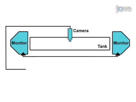 Automated Interactive Video Playback for Studies of Animal Communication
