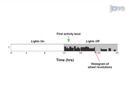 Measuring Circadian and Acute Light Responses in Mice using Wheel Running Activity