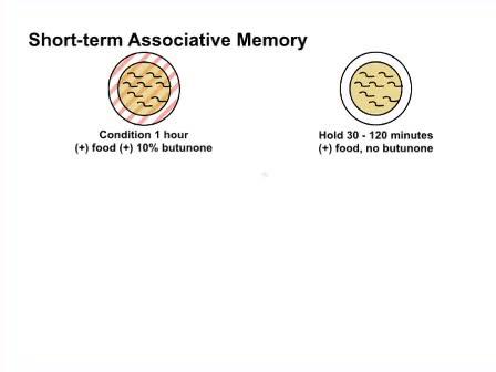 <em>C. elegans</em> Positive Butanone Learning, Short-term, and Long-term Associative Memory Assays