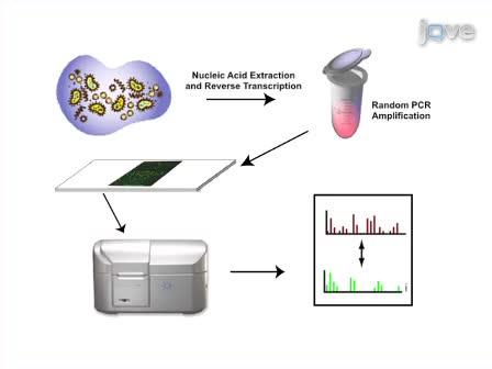 Using a Pan-Viral Microarray Assay (Virochip) to Screen Clinical Samples for Viral Pathogens