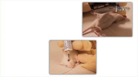 Principles of Rodent Surgery for the New Surgeon