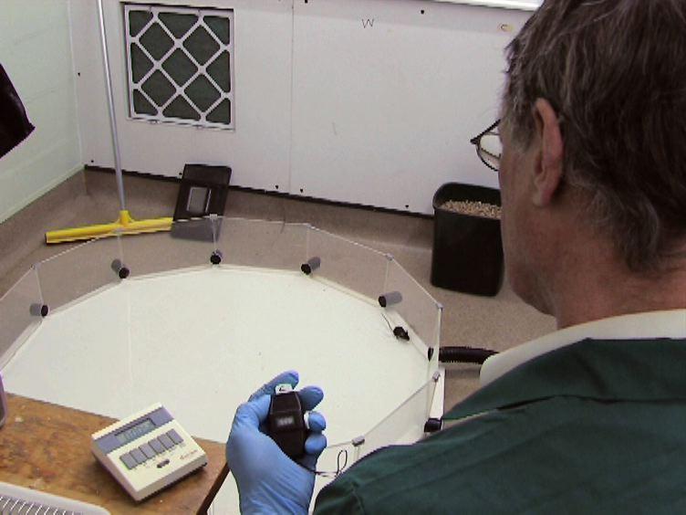 Grunt vann (Padling) Varianter av Water Maze Tester i Mus