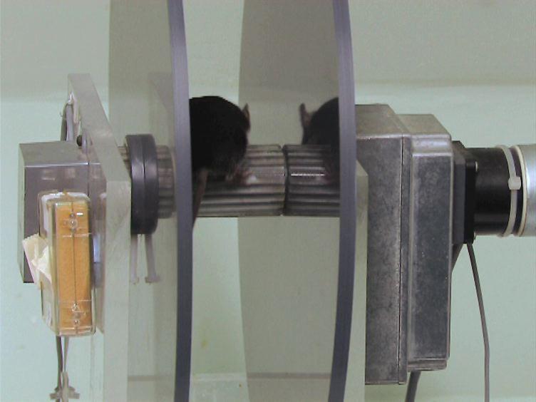 Measuring Motor Coordination in Mice