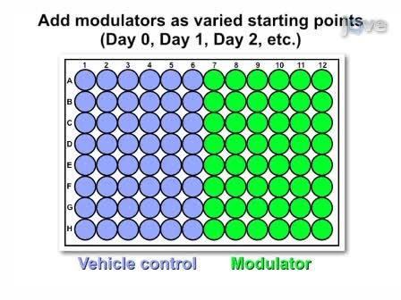 Modificato il mouse sulle cellule staminali Saggio base per quantificare l'efficienza di induzione cardiogeno