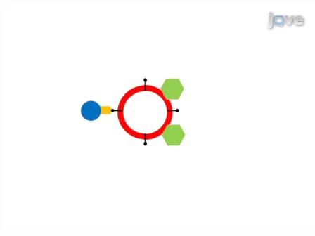 Lípidos vesículas mediada por cromatografía de afinidad utilizando magnética clasificación de células activadas (LIMACS): un nuevo método para analizar la interacción de proteínas y lípidos