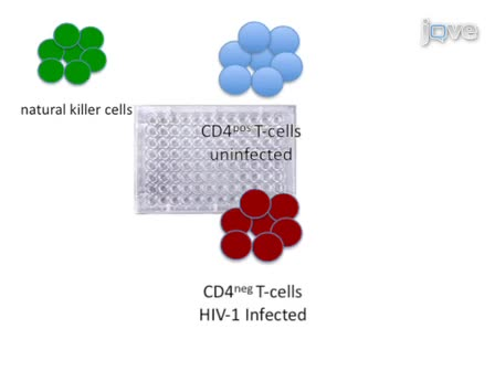 Preparation and Use of HIV-1 Infected Primary CD4+ T-Cells as Target Cells in Natural Killer Cell Cytotoxic Assays