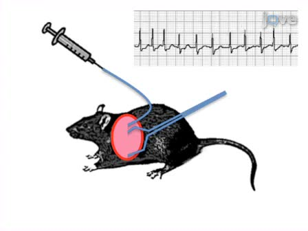 Methods for ECG Evaluation of Indicators of Cardiac Risk, and Susceptibility to Aconitine-induced Arrhythmias in Rats Following Status Epilepticus