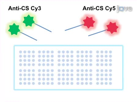 Determining Genetic Expression Profiles in <em>C. elegans</em> Using Microarray and Real-time PCR