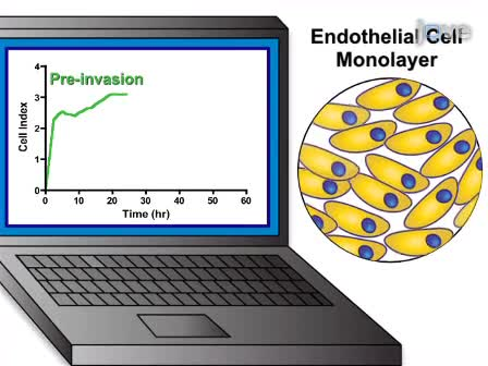 A Real-time Electrical Impedance Based Technique to Measure Invasion of Endothelial Cell Monolayer by Cancer Cells