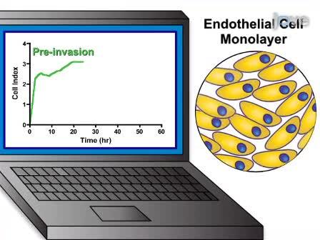 В режиме реального времени Электрические характеристики Сопротивление техника выполнения измерить Вторжение клеточный монослой эндотелиальных раковыми клетками