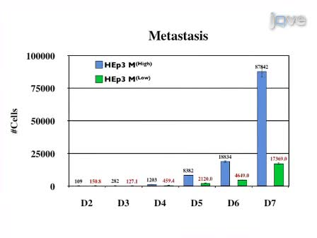 कैंसर मेटास्टेसिस के मात्रात्मक विश्लेषण एक एवियन भ्रूण मॉडल का उपयोग