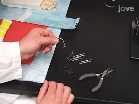 椎管内针对肌萎缩性脊髓侧索硬化症和外伤性脊髓损伤颈腹角细胞移植