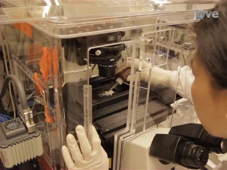 Dinamik Canlı Hücre Görüntüleme Konukçu-Patojen Etkileşimleri Çalışma Optik Tuzak
