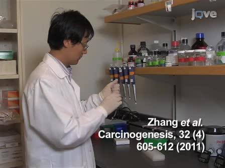 Chromosomics:同時に新規OctoChrome FISHアッセイを使用した全24ヒト染色体における数値と構造変化の検出