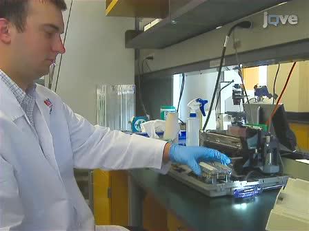Creating Transient Cell Membrane Pores Using a Standard Inkjet Printer