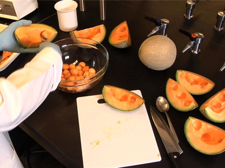 Fruit Volatile Analysis Using an Electronic Nose