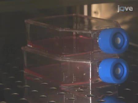 Une technique de microscopie TIRF en temps réel, imagerie simultanée du TCR et de ses associés protéines de signalisation