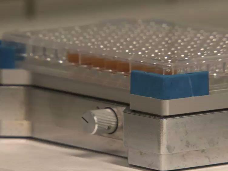 液相亲和捕获试验用磁珠研究蛋白质相互作用:脊髓灰质炎病毒的Nanobody范例