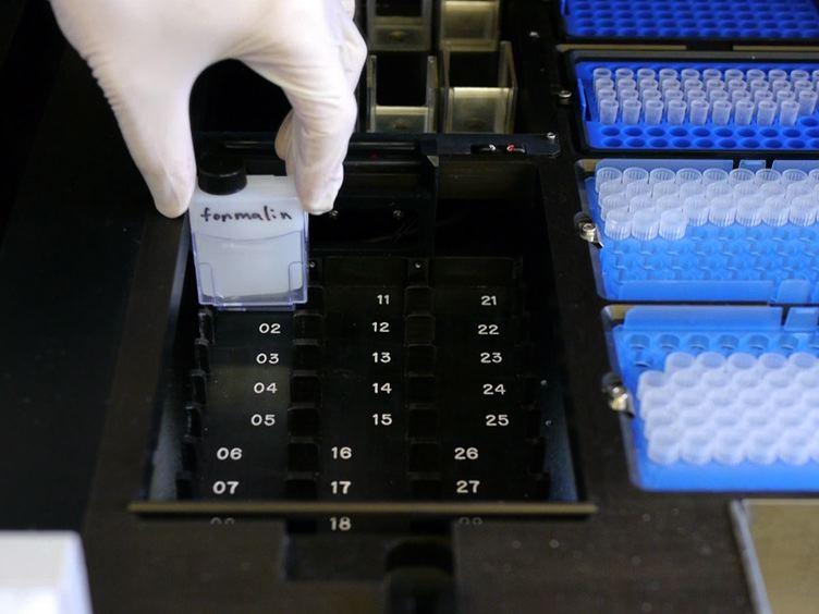 High-throughput Physical Mapping of Chromosomes using Automated <em>in situ</em> Hybridization
