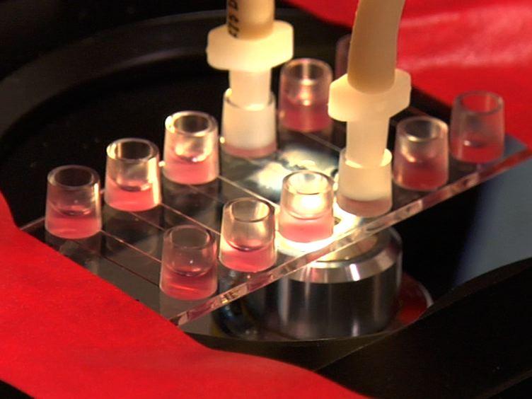عزل خلايا الإنسان الوريد السري غشائي واستخدامها في دراسة التهجير تحت ظروف تدفق العدلات