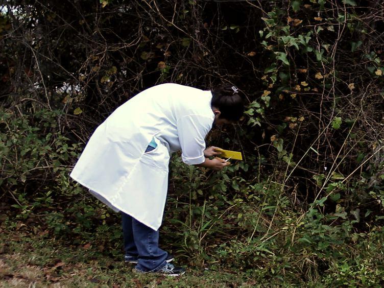 发射使用粉虱的植物病毒
