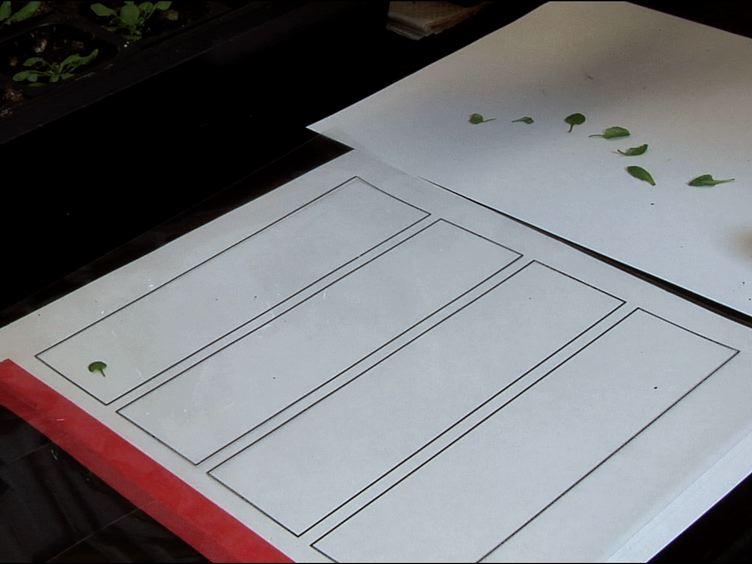 LeafJ: En ImageJ Plugin til Semi-automatiseret Leaf Shape Måling