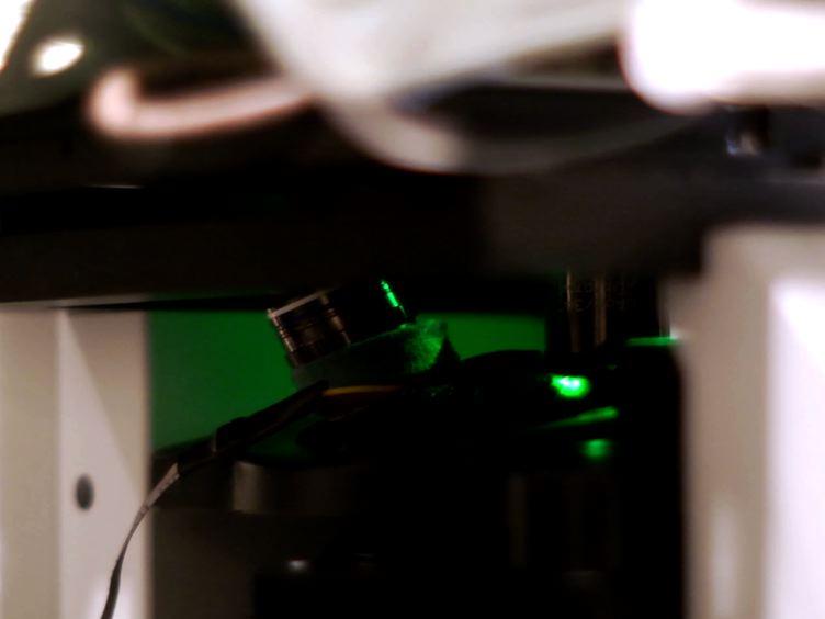 Kvantifiering glomerulär permeabilitet av fluorescerande makromolekyler Använda 2-foton mikroskopi i München Wistarråttor