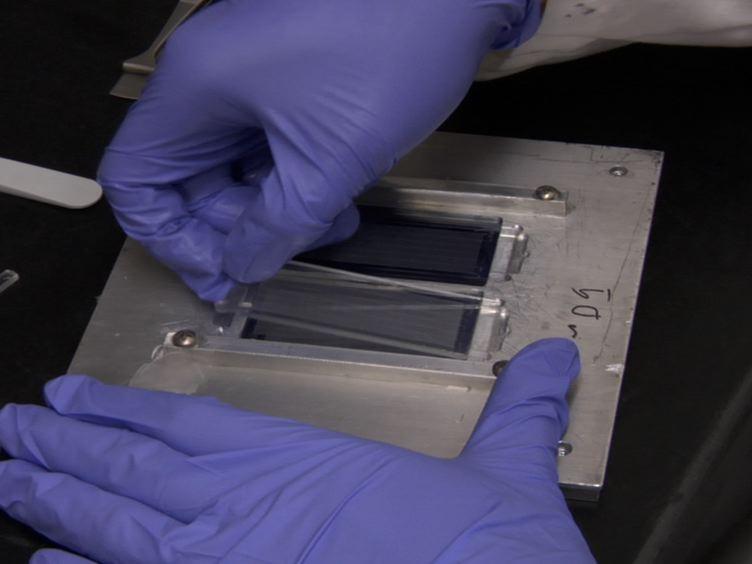 Quantitative à haut débit Test de cytotoxicité cellulaire unique pour les cellules T