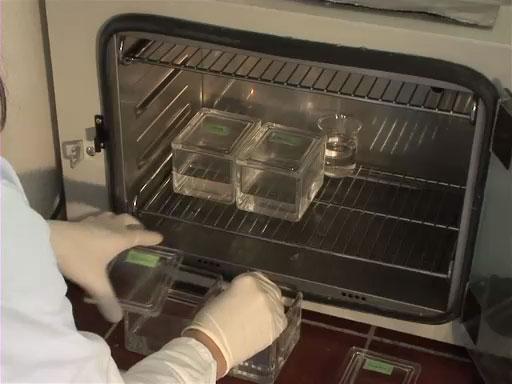 Das Vorbereiten von histologischen Präparaten für die Lichtmikroskopie