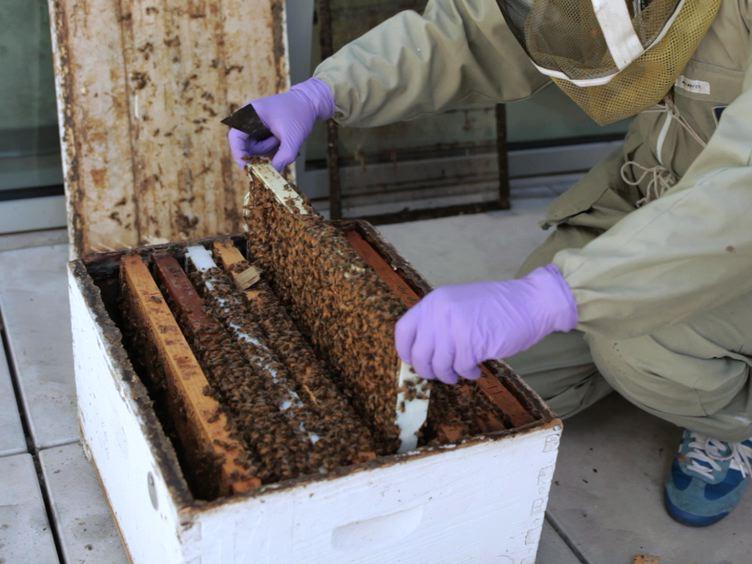 RNAi-mediated Double Gene Knockdown and Gustatory Perception Measurement in Honey Bees (<em>Apis mellifera</em>)