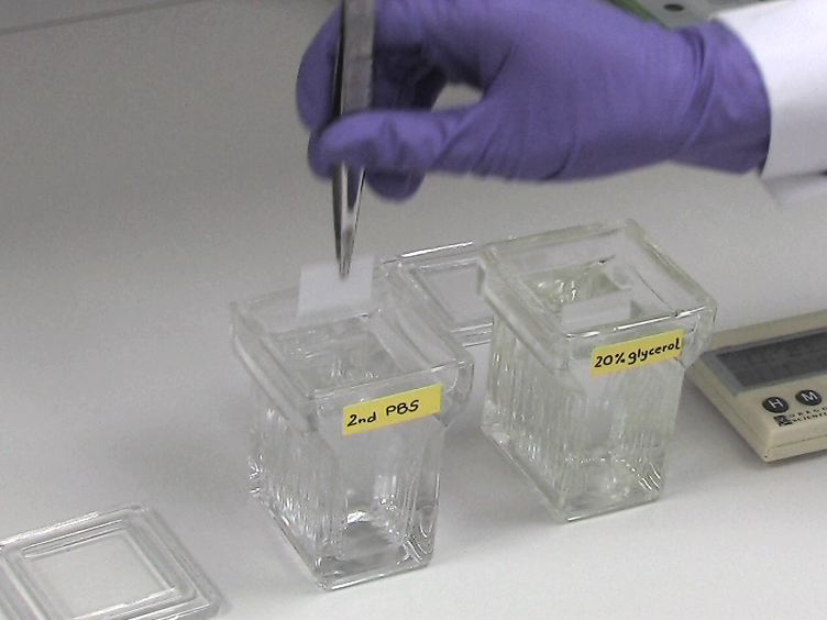 Robust 3D DNA FISH Using Directly Labeled Probes