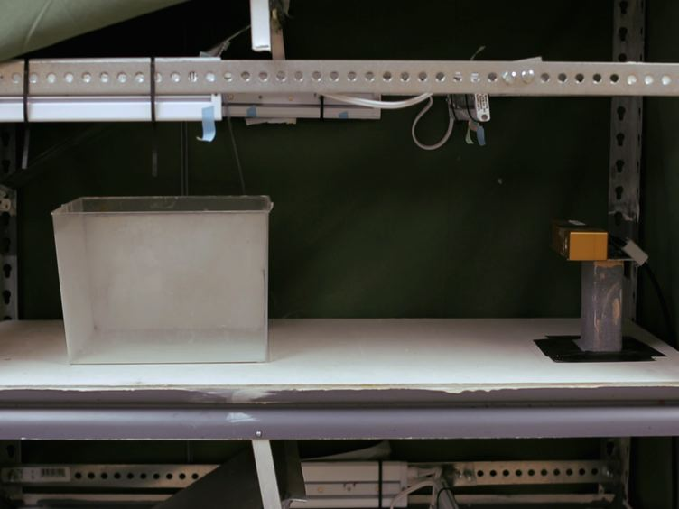 El uso de un sistema de seguimiento 3D Automatizado de Registro Individual y bajíos de adultos de pez cebra
